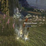 Exploring the Elder Scrolls Online - Mountain Flower